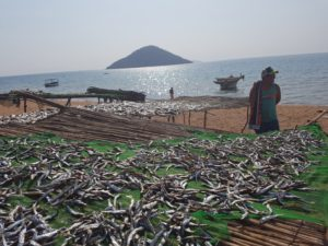 drying-fish-cape-maclear